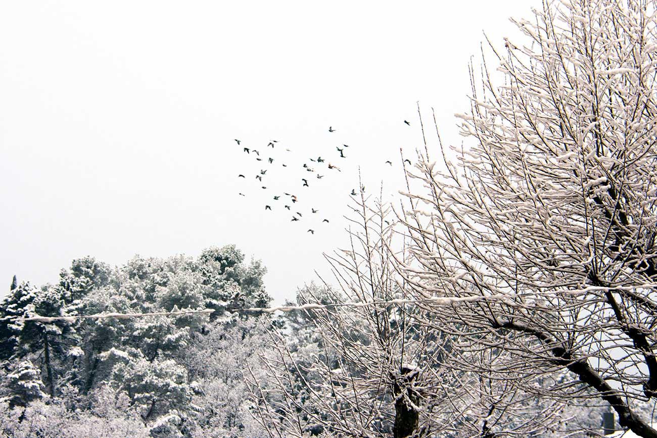 La Côte d'Azur sous la neige fevrier 2018